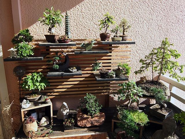 bonsai-garden-1183566_640.jpg