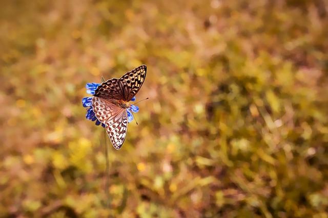 butterfly-1698965_640.jpg