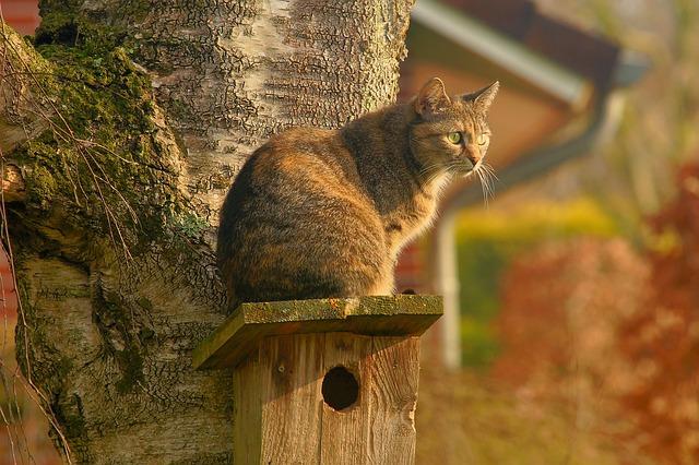 cat-2195538_640.jpg