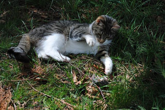 cat-2836936_640.jpg