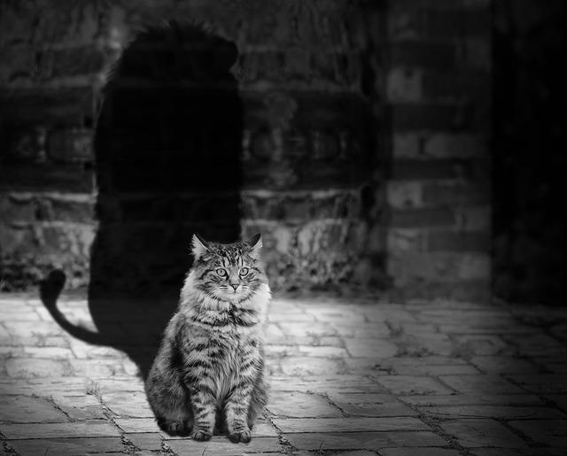 cat-564202_640.jpg