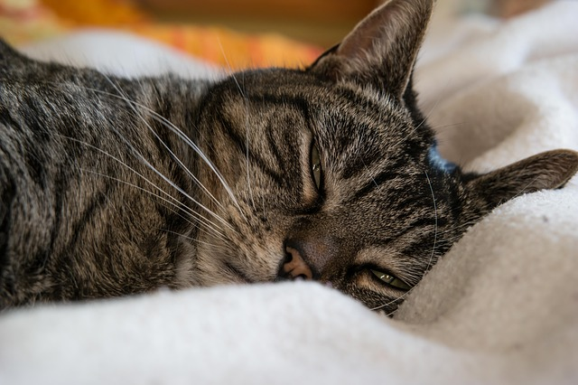 cat-648136_640.jpg