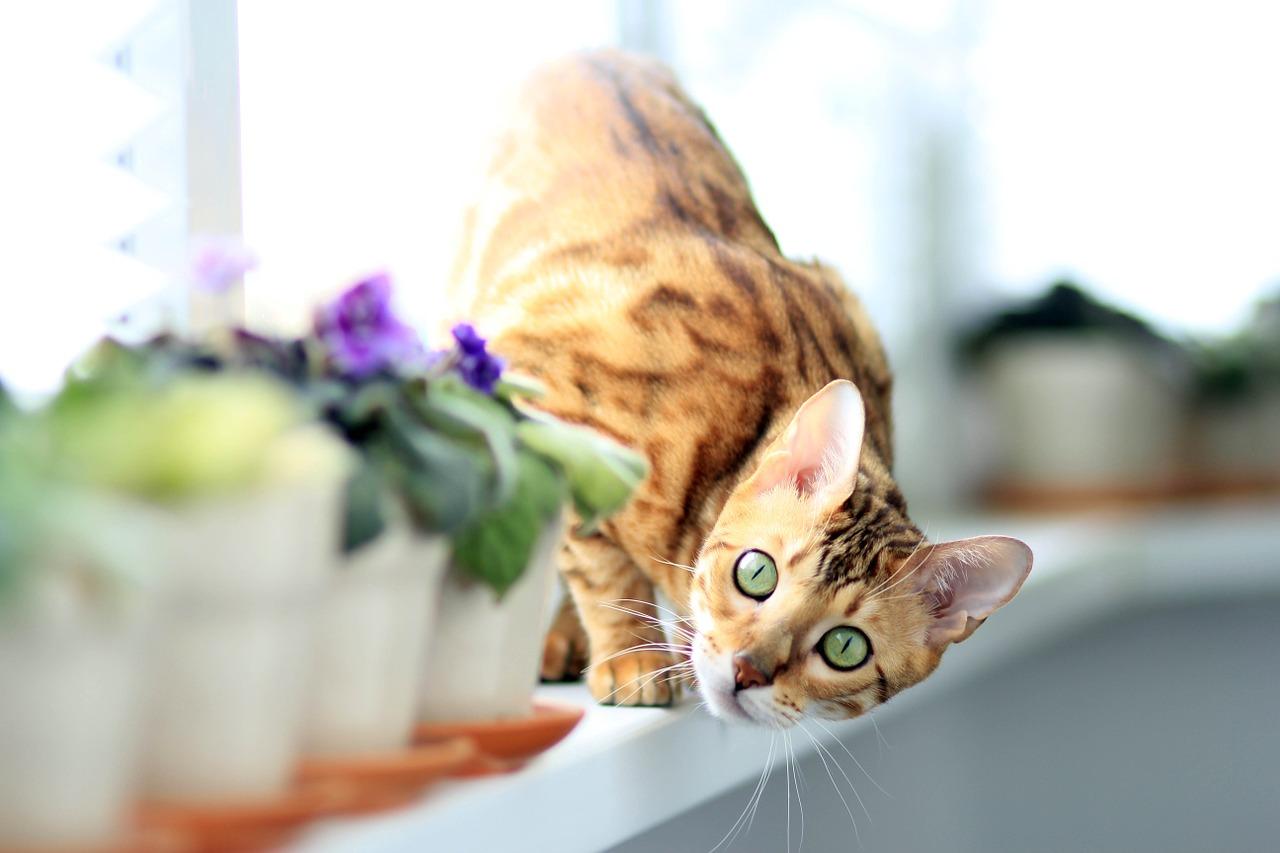 cat-877108_1280.jpg