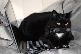 cat-963931_180.jpg
