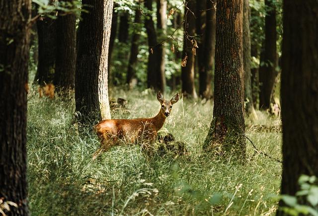 deer-5406930_640.jpg