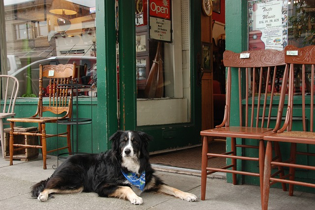 dog-1574951_640.jpg
