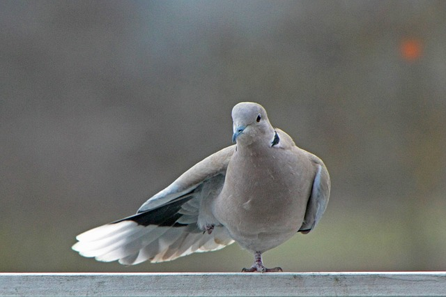 dove-2030421_640.jpg