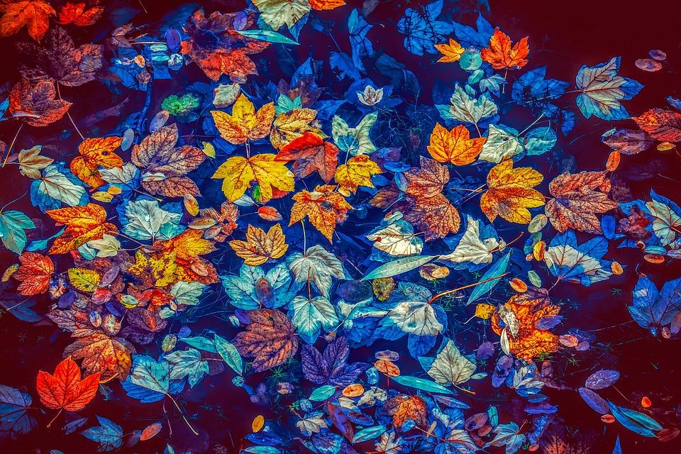fall-leaves-3744649_960_720.jpg