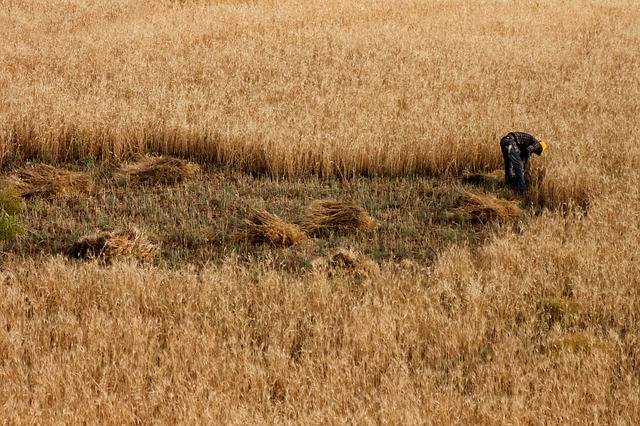 field-1895180_640.jpg