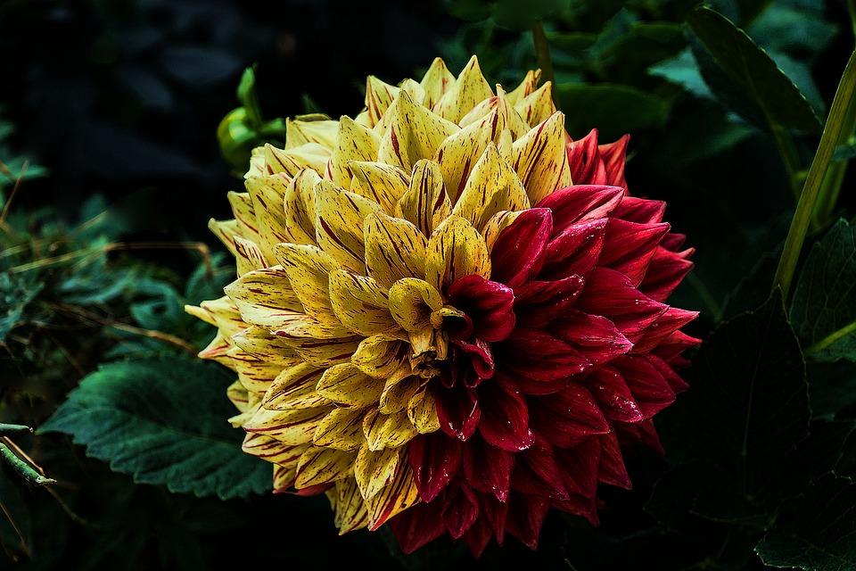flower-888401_960_720.jpg