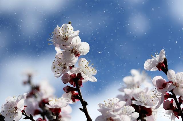 flowers-4071571_640.jpg
