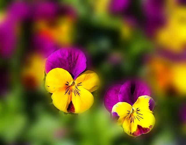 flowers-670192_640.jpg