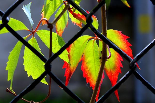 foliage-4466229_640.jpg