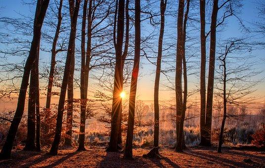 forest-1950402_340.jpg