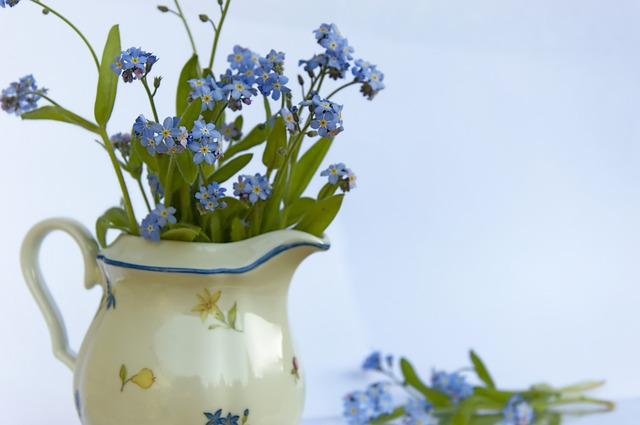forget-me-not-4157562_640.jpg