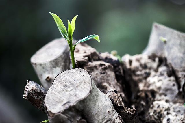 grow-781769_640.jpg
