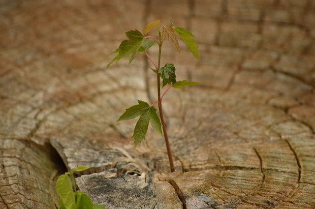 growth-615750_640.jpg