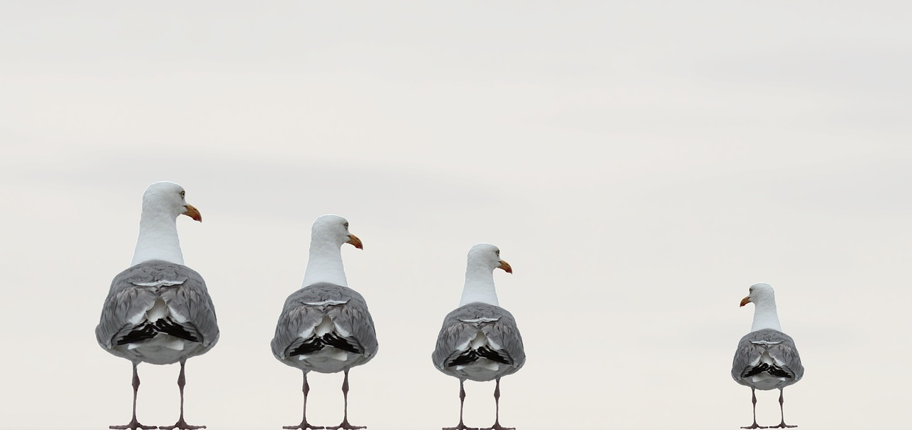 gulls-2662550_1280.jpg