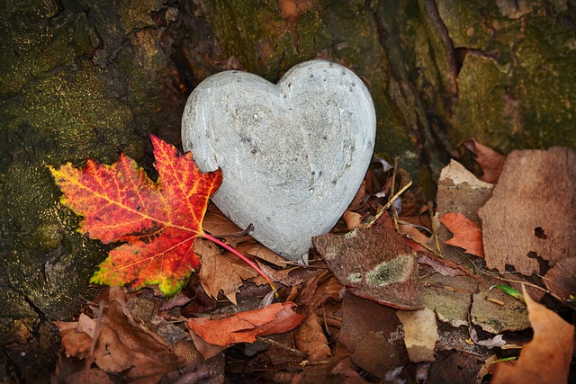 heart-3764307_640.jpg