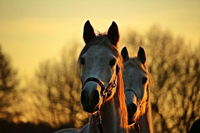 horse-1942706_640.jpg