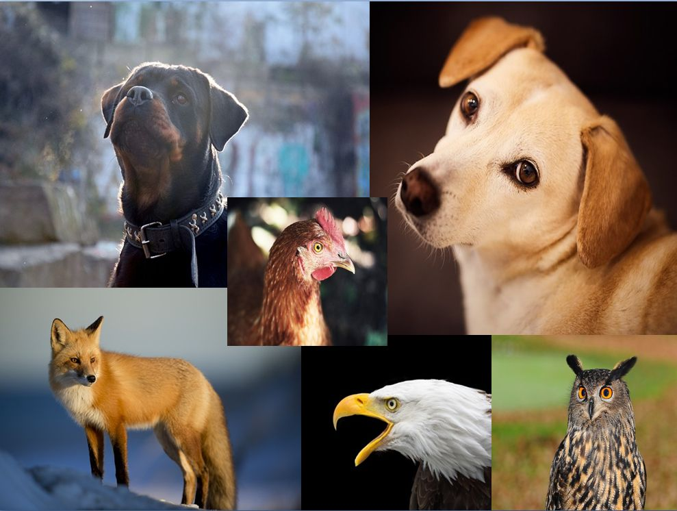 kutyas.jpg