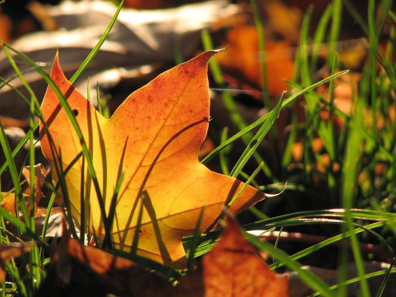 leaf-382771_1280.jpg