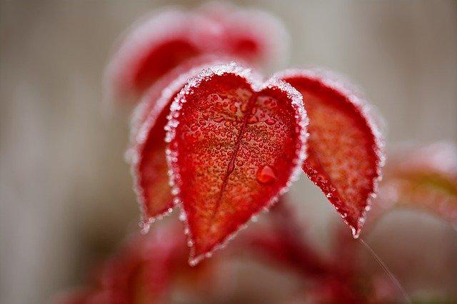 leaves-4673997_640.jpg