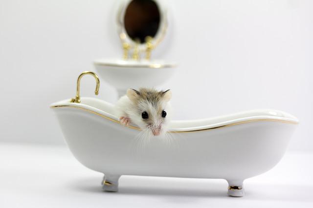 mouse-4624918_640.jpg