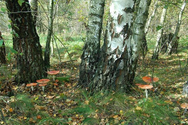 mushrooms-1231605_640.jpg