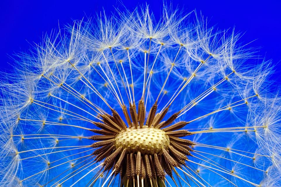 nature-3092555_960_720.jpg
