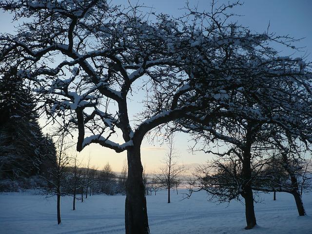 orchard-997756_640.jpg