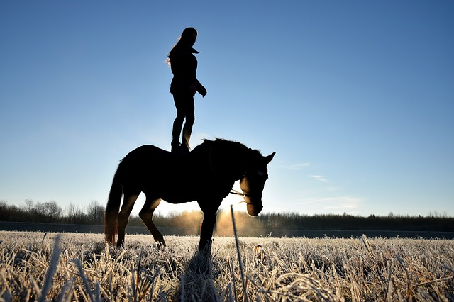 person-on-a-horse-2124175_640.jpg