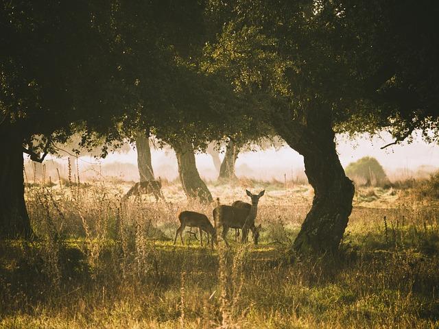 roe-deer-3842137_640.jpg