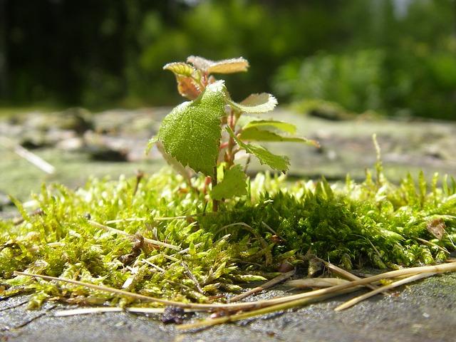 seedling-1913607_640.jpg