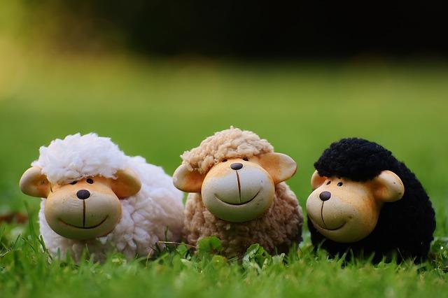 sheep-1642874_640.jpg