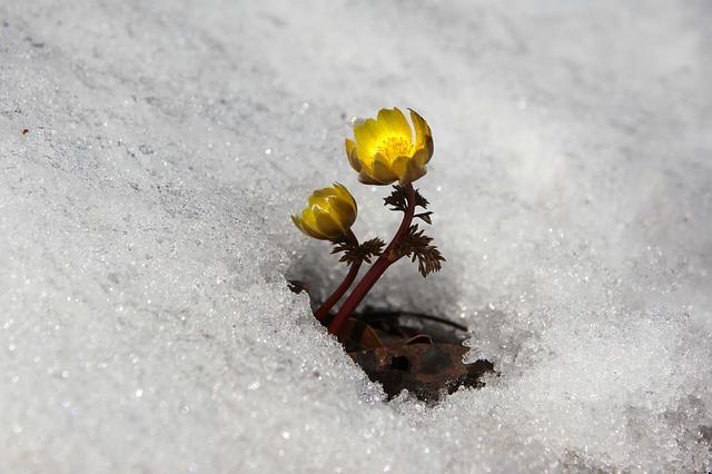 snow-3280728_640.jpg