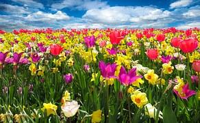 spring-awakening-1197602_180.jpg