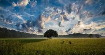 tree-247122_180.jpg