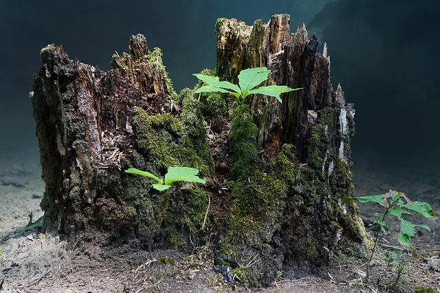 tree-stump-2267010_640.jpg