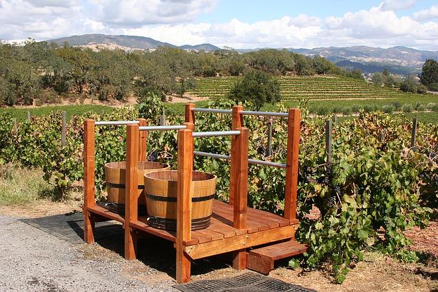 vineyard-1331574_640.jpg