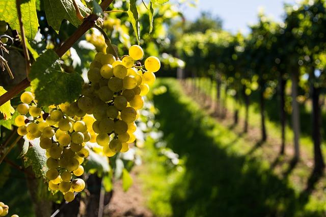 wine-933419_640.jpg
