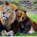 Az oroszlán és a medve titkos paktuma, avagy a szárnyatört sas segélyakció