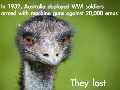 emu war.jpg