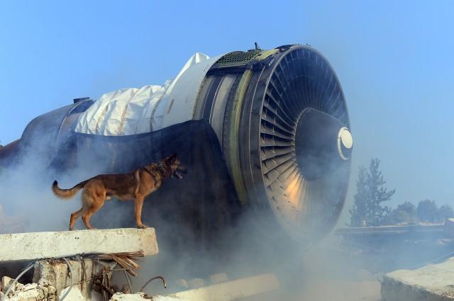 oketz-dog-next-to-airplane-engine.jpg