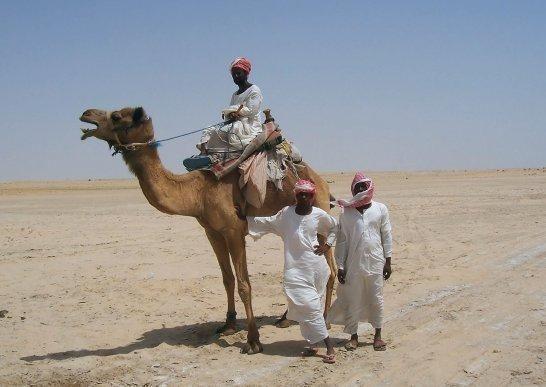 Beduinok, Illegális bevándorlók