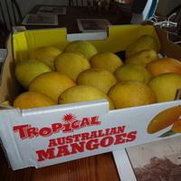 Kaja: beindult a mangószezon
