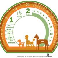 Hány éves a kutyád?