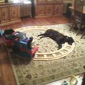 Öngyilkosjelölt kutya