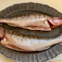 Az egyik legfinomabb magyar hal: a süllő