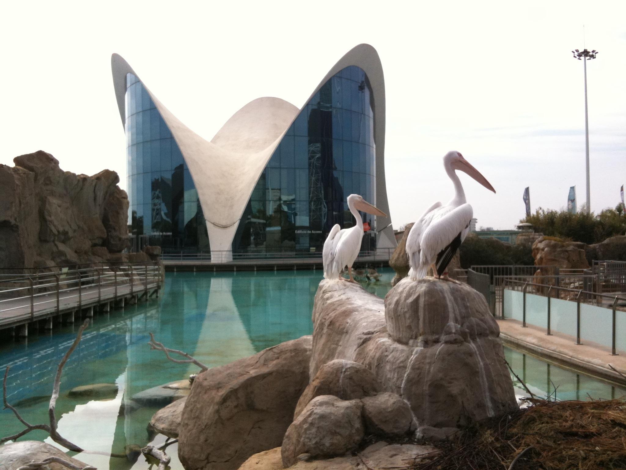2011 Valencia, Santander, Cadiz, Torremolinos, egyéb 066.jpg